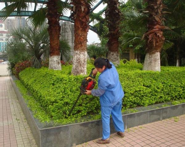 阳泉绿化工程施工